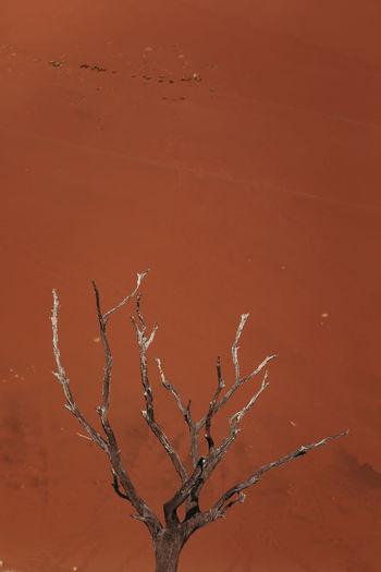 Bare tree against orange sky