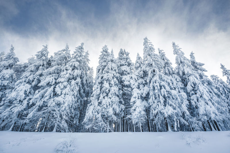 Snow covered trees on landscape against sky