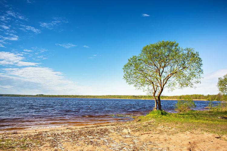 Tree on beach against blue sky
