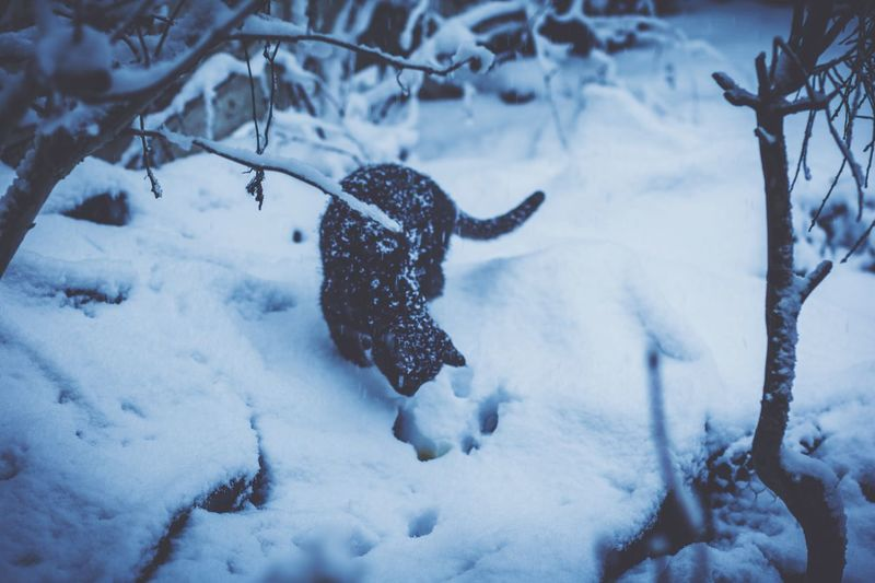 Cat Pee Feline Pet Portraits Animal Portrait Funny Peeing Cat EyeEm Selects Winter Snow Cold Temperature Weather Nature Animal Themes Outdoors One Animal Snowing Day No People Beauty In Nature EyeEmNewHere Shades Of Winter