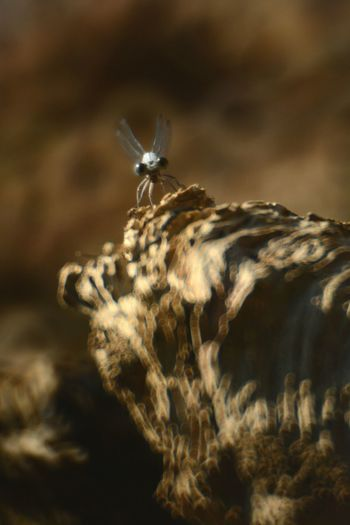 Glitch Dragonfly Nature Mirrorlens Barkleylake Insect Nature Photography Macro Insects