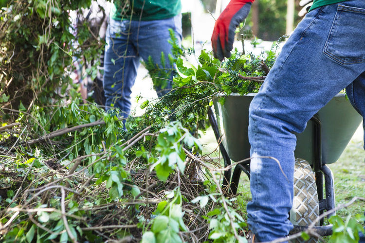 Branches Clearing Collecting Gardener Gardening Home Improvement Plants Wheelbarrow Workers Working Close-up Community Garden Day Foliage Garden Gardeners Landscape Garden Landscape Gardening Landscaping Leaves Men Nature Outdoors Real People Working
