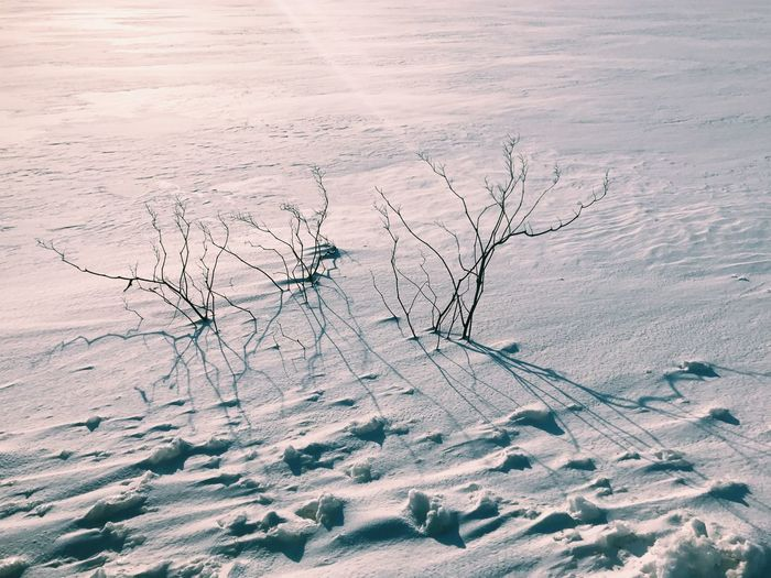 snow Snow Cold Temperature Winter Nature Environment Beauty In Nature Landscape