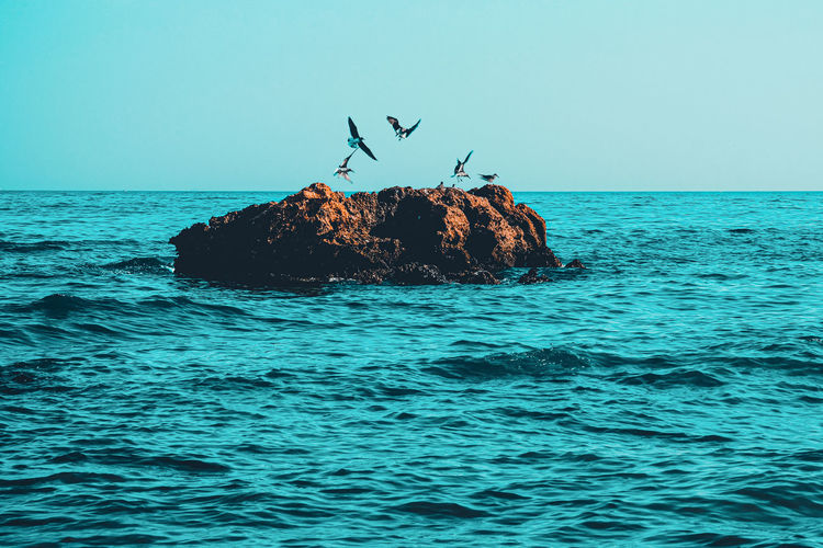 View of birds on rock in sea against sky