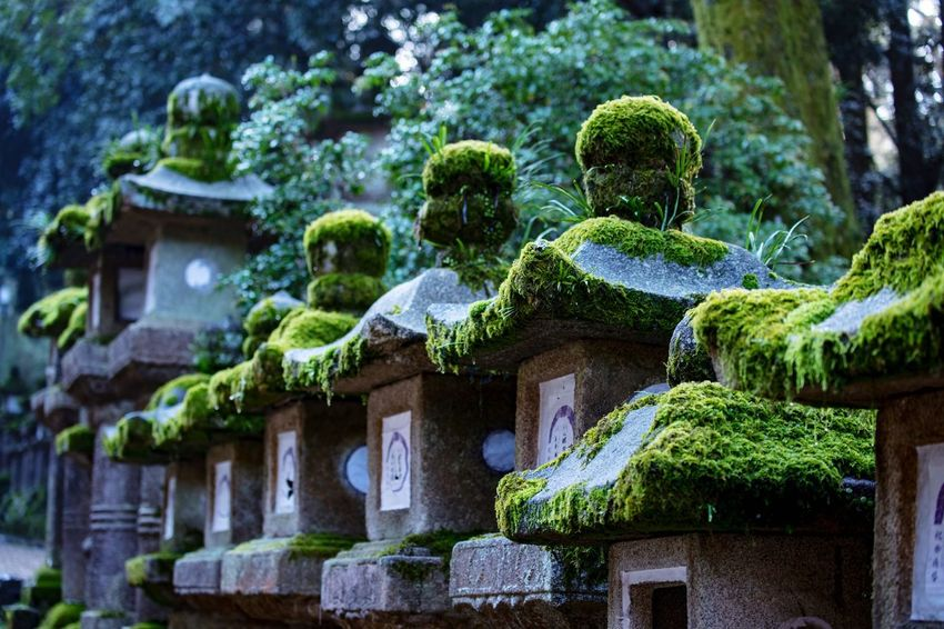 Green Color No People Moss Spirituality Religion Outdoors Day Tree Architecture Nature Sculpture Beauty Beauty In Nature 灯篭 苔 Mossy Moss-covered Mossy Stone Shrine Shrine Of Japan 春日大社 Nara,Japan