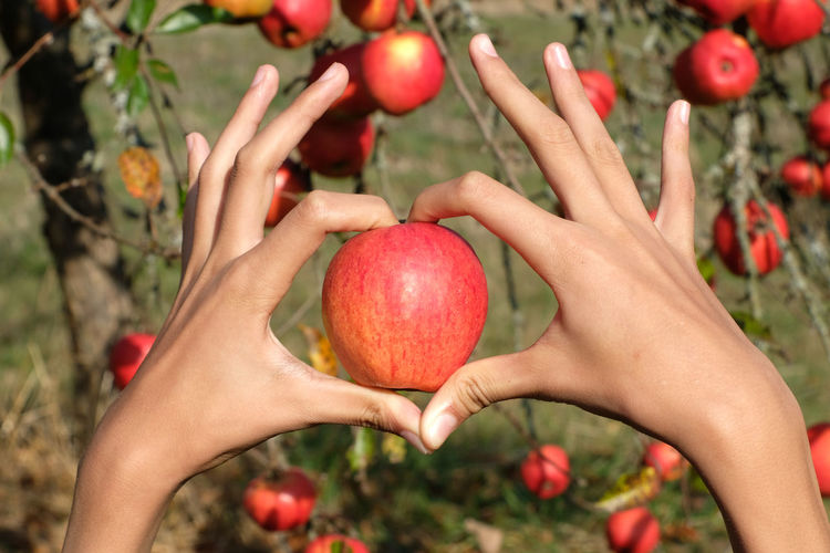 Heart hands hold one fresh red apple. clear blue sky background. sign of love and health care.