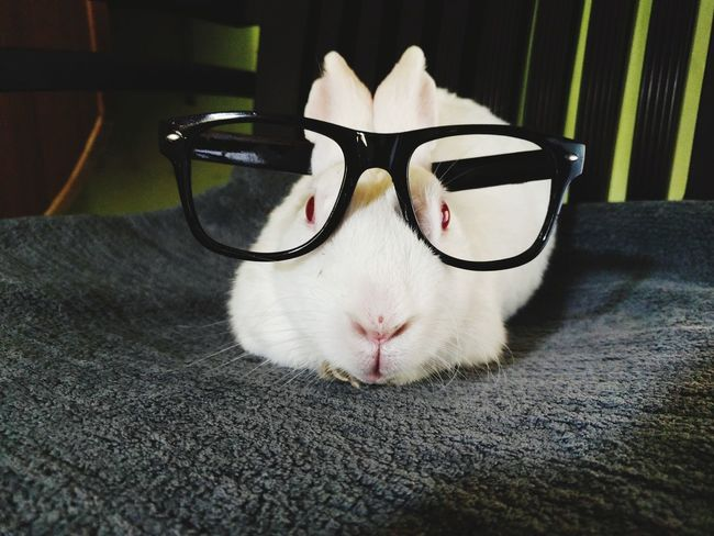 Peace..!! Pets Domestic Animals One Animal Mammal Eyeglasses  Animal Themes Sunglasses Indoors  Close-up Portrait No People Day Looking At Camera Tranquil Scene EyeEm Best Shots Photography
