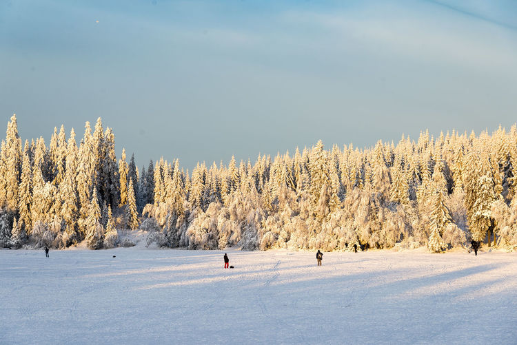 Beauty In Nature Cloud Cold Temperature Day Forest Frozen Lake Landscape Nature Norway Oslo Outdoors People Remote Scenics Shadow Skiing Snow Snow Covered Snowy Tree Trees Warm Light Winter Woods