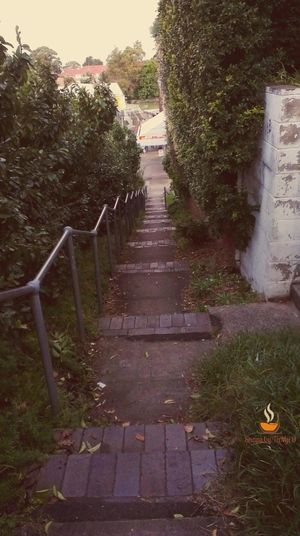 The Way Forward Nature Steps Leaf Staircase Outdoors