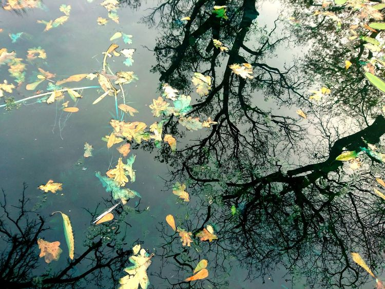 Water Reflections Water Leaves Leaves And Sky Leaves In Water Fallen Leaves Tree Shadows Tree Reflections