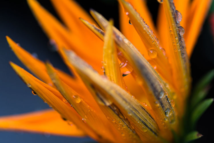 Nature Beauty In Nature Blooming Close-up Day Flower Flower Head Fragility Freshness Growth No People Orange Color Outdoors Petal Plant Water Paint The Town Yellow