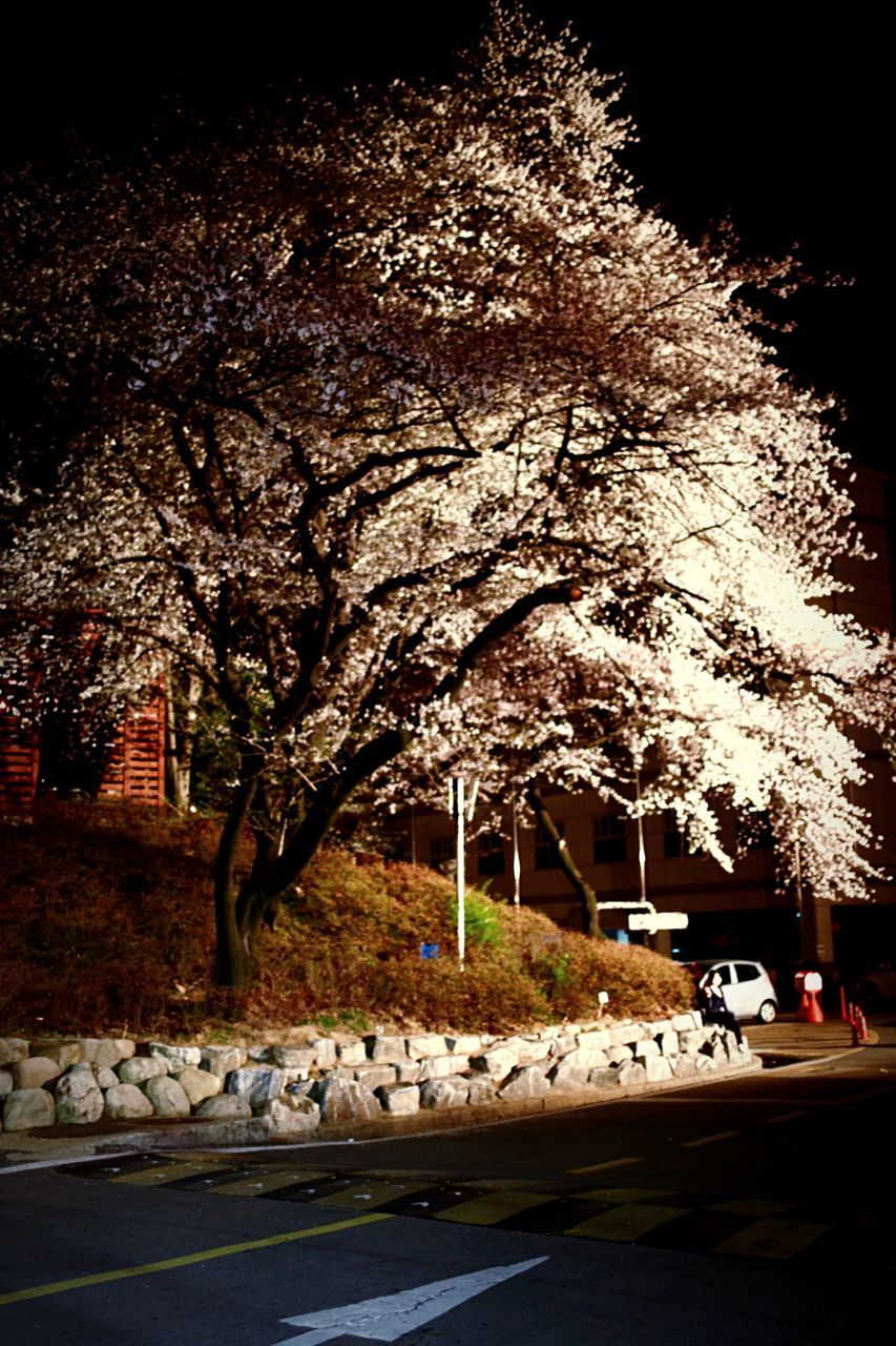 tree, road, transportation, no people, land vehicle, growth, outdoors, nature, night, beauty in nature, flower, branch, sky, illuminated