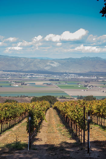 Landscape of Californian vineyard with mountains in background and clouds in sky Agriculture Beauty In Nature California Cloud - Sky Day Field Landscape Mountain Mountain Range Nature No People Outdoors Rural Scene Scenics Sky Tranquil Scene Tranquility Tree Vineyard