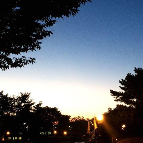 Tree Clear Sky Silhouette Sunset Outdoors Sky No People Nature Day Live Sunset Far Mood 슬슬 졸업작품이 마무리 하던 때. 홀가분한 마음으로 학교를 나오고 있었다.