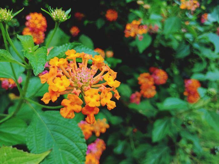 Blur Flowers,
