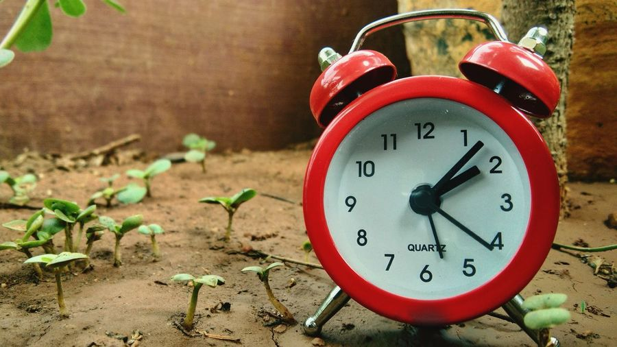 Clock Time Alarm Clock Minute Hand Clock Face No People Hour Hand Day Close-up Outdoors Plants Plant Clock Red Red Color Clockwork Mudflat Mud