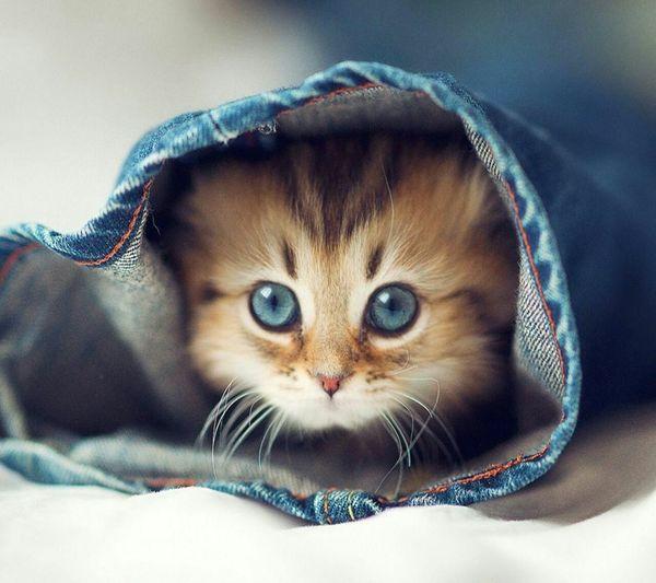 Open Edit Cute Pets Cute Cats I Love Cats AndroidPhotography Cute♡ Cutecute CuteCute ♡ Bebe Cutecute Amor Baby Cuteness Eyem Best Shots