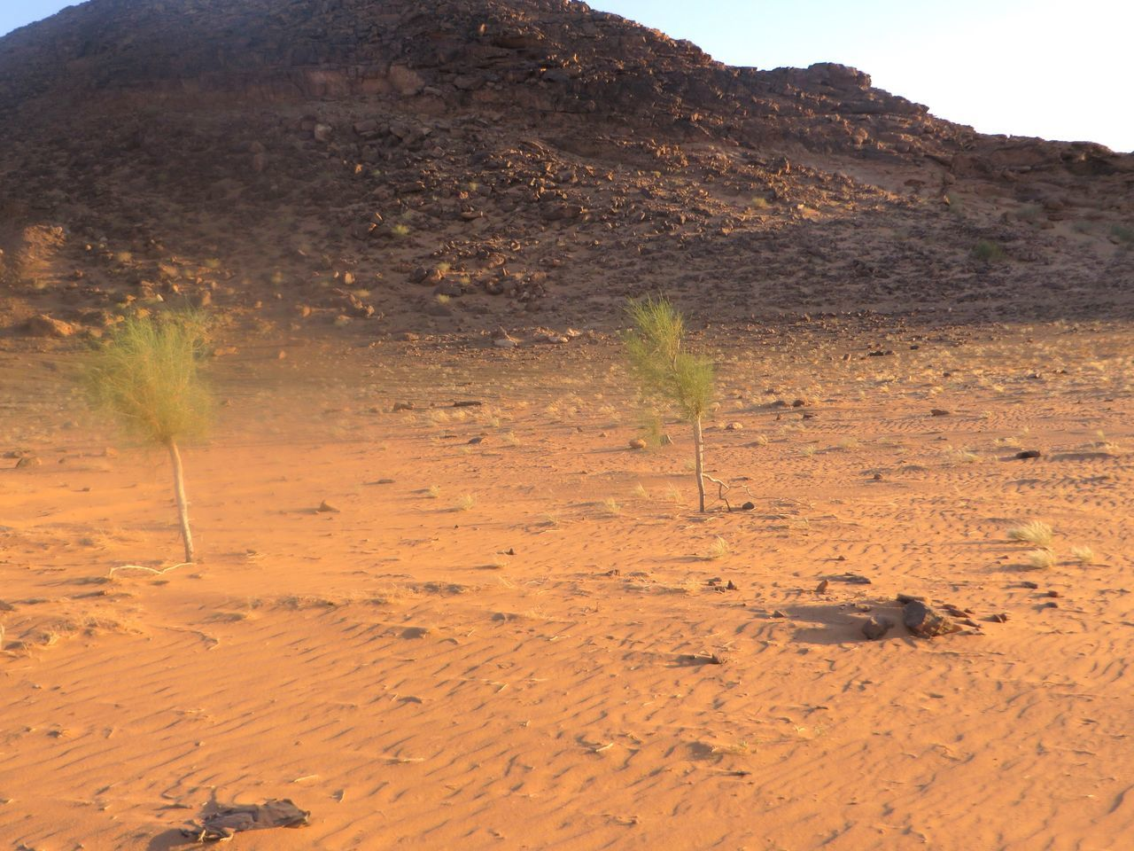 nature, no people, plant, landscape, day, outdoors, sand, mountain, beauty in nature
