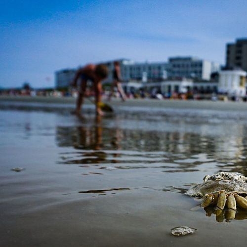 Water Reflection City Sky Sea Beach Outdoors Architecture Puddle Building Exterior Day Adult People Adults Only Only Men Beach Crab Borkum, Germany Summer Water Reflections Sun The Week On EyeEm