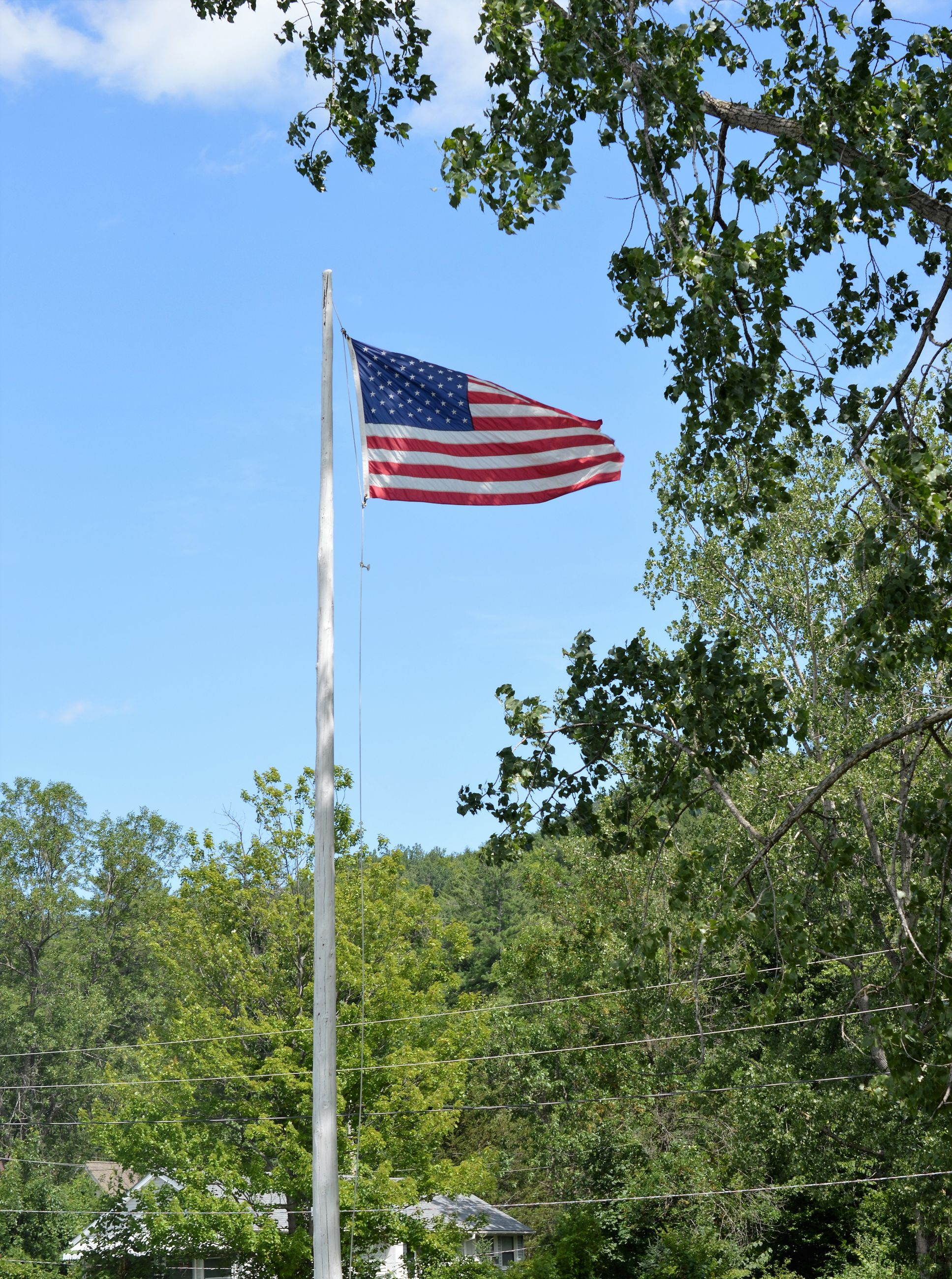 flag, patriotism, identity, national flag, american flag, low angle view, tree, wind, sky, pride, culture, blue, pole, day, cloud, no people, growth, outdoors, nature, cloud - sky, beauty in nature