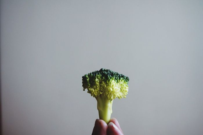 If you look hard enough, there's actually a big forest in there. Size does not matter Broccoli Perspective Minimalism