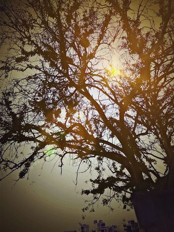 Tree And Sky Toohot Temprature Shootingup Using My Mobile Shooting Photos