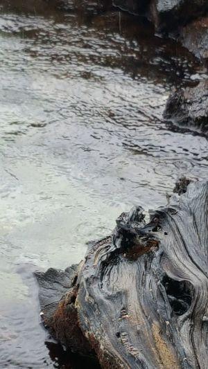 Driftwood Hawaiian Water Wood Ocean