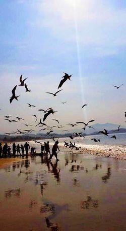 Beach Photography Birdwatching Bird Photography Beach Life Life Is A Beach