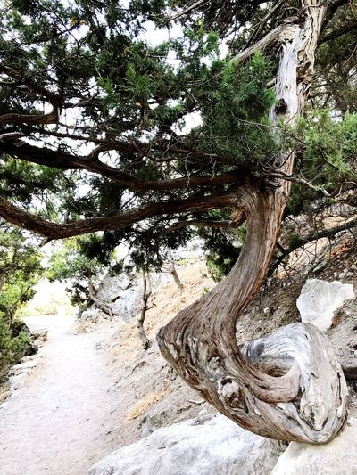 Low angle view of driftwood on tree trunk