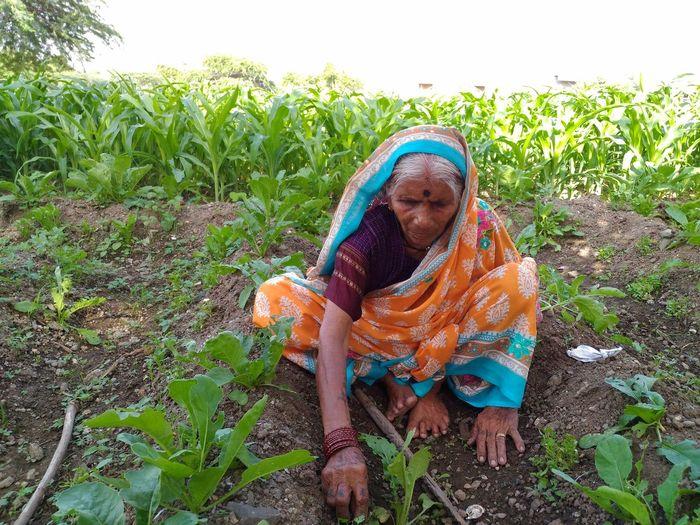 Senior Woman Harvesting Plants At Farm