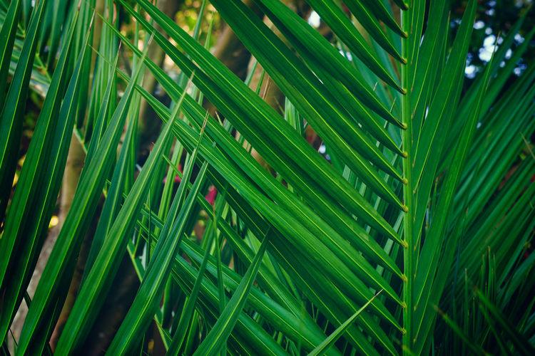 Full frame shot of green grass