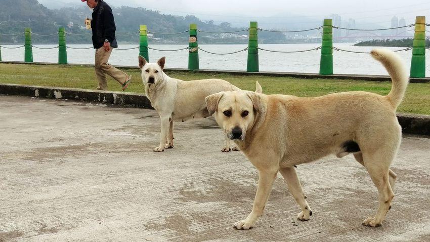 Dogs Doggy Taking Photos Bicycle Trip Enjoying Life Q Relaxing Cheese! Animal 流浪漢,狗狗1,狗狗2 🚶...🐕...🐕...📷╮(*^o^*)
