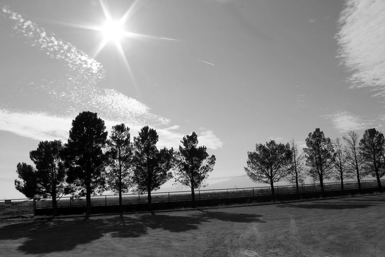 Silhouette trees on field against bright sun