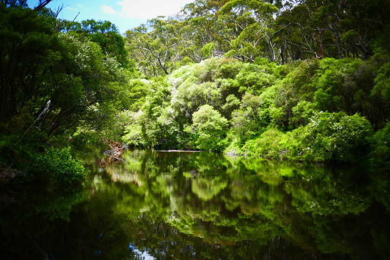 Australia Australian Landscape Bush Green Nature Nature Travel Reflection Reflections In The Water River Serinity Water EyeEmNewHere New South Wales  Travel Photography Australian Bush Landscape Tranquility No Filter Outdoors Tree Sunlight Beauty In Nature Scenics Low Angle View Australian Bushland The Great Outdoors - 2017 EyeEm Awards Perspectives On Nature