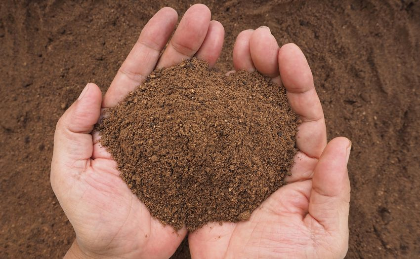 High quality of palm kernel meal in man hands Oil Palm Protein Nutrition Nutrient Feed  Feeding  Agriculture Human Hand Human Body Part Holding Human Finger Close-up One Person Food One Man Only Only Men Outdoors