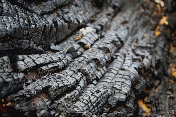 A burned tree Eyeemgermany EyeEm Best Shots EyeEm Nature Lover EyeEm Gallery Eyemphotography Canonphotography EyeEm Selects Share Your Adventure Passionforphotography Nature Respect Burned Fire Woodfire Holz Verbrannter Baumstamm Wald Feuer Seafood Close-up Firewood Ash Log