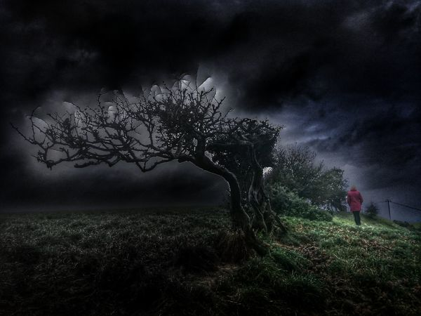 Walking away Hello Darkness My Old Friend Tree Dramatic Sky Nature Storm Cloud Outdoors Branch Emotive Portraiture Emotions Emotional Photography Alone... Beauty In Nature Hello Darkness My Old Friend Sky Cloud - Sky Cloud Porn😍 Clouds And Sky Mood Captures Dramatic Dramatic Scene Edit Junkie Hawthorne Tree Wales❤ Emotive Moments Emotional Walking Alone... The Great Outdoors - 2017 EyeEm Awards Live For The Story EyeEmNewHere Let's Go. Together. Love Yourself
