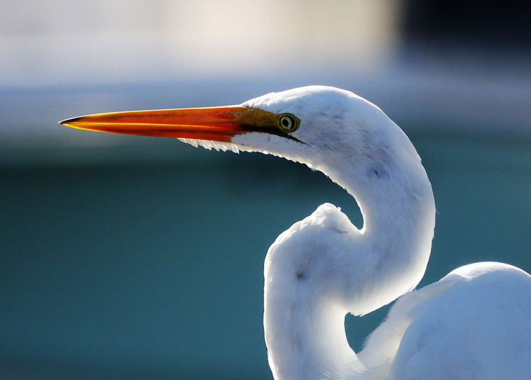 Animal Wildlife Bird Egrets Egrets In Marina Marina No People Outdoors Water Birds White Egrets