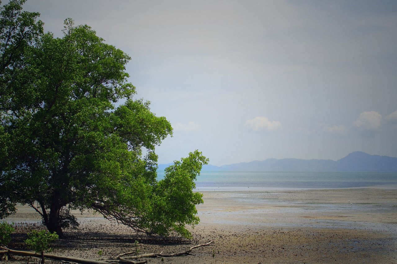 nature, tree, sea, scenics, beauty in nature, beach, tranquility, water, sky, tranquil scene, no people, outdoors, day, sand, growth