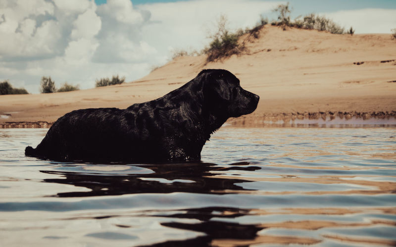 Dog standing in a water