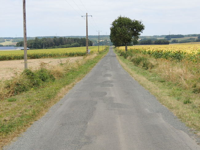 France Loire Touraine Day Diminishing Perspective Direction Electricity  Environment Field Grass Growth Land Landscape Nature No People Outdoors Plant Road Sky Telephone Line The Way Forward Tranquil Scene Tranquility Transportation Tree vanishing point