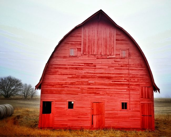"If you've ever driven through a rural area, it's likely that you've seen the red barns that speckle the farming landscape. There are several theories as to why barns are painted red. Centuries ago, European farmers would seal the wood on their barns with an oil, often linseed oil -- a tawny-colored oil derived from the seed of the flax plant. They would paint their barns with a linseed-oil mixture, often consisting of additions such as milk and lime. The combination produced a long-lasting paint that dried and hardened quickly. (Today, linseed oil is sold in most home-improvement stores as a wood sealant). Now, where does the red come from? In historically accurate terms, ""barn red"" is not the bright, fire-engine red that we often see today, but more of a burnt-orange red. As to how the oil mixture became traditionally red, there are two predominant theories: Wealthy farmers added blood from a recent slaughter to the oil mixture. As the paint dried, it turned from a bright red to a darker, burnt red.Farmers added ferrous oxide, otherwise known as rust, to the oil mixture. Rust was plentiful on farms and is a poison to many fungi, including mold and moss, which were known to grown on barns. These fungi would trap moisture in the wood, increasing decay. Regardless of how the farmer tinted his paint, having a red barn became a fashionable thing. They were a sharp contrast to the traditional white farmhouse. As European settlers crossed over to America, they brought with them the tradition of red barns. In the mid to late 1800s, as paints began to be produced with chemical pigments, red paint was the most inexpensive to buy. Red was the color of favor until whitewash became cheaper, at which point white barns began to spring up. Old Barns Rural America Farm Life Check This Out Getty Images Barn My Neighborhood EyeEm Best Shots Portrait Of America Farmlife EyeEm Bestsellers"