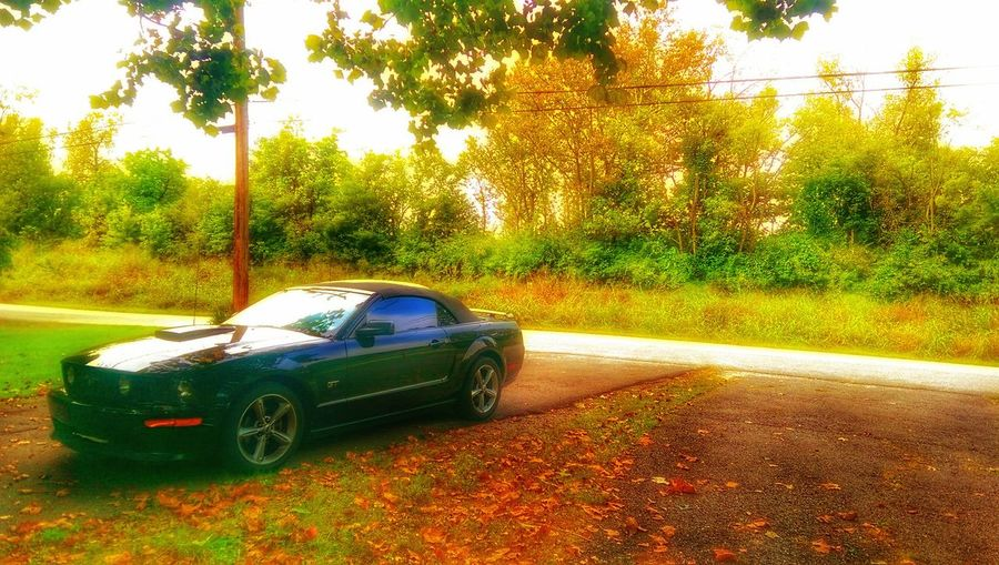 EyeEm Vision Ford Mustang GT Decepticon Mother Vs Nature Fast Cars Electrick Treescape Green Color Clear Sky Looks Like Fall Eye Am Nature Notes From The Road