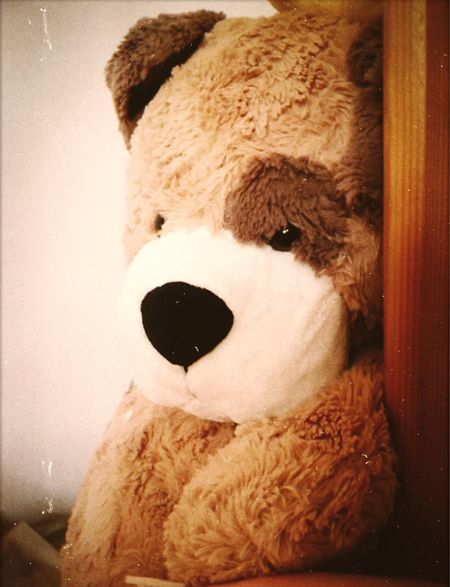 🐻 Stuffed Toy Toy Representation Teddy Bear Indoors  No People Close-up Mammal Home Interior Still Life Brown Day Toy Animal Human Representation Art And Craft Hair Softness