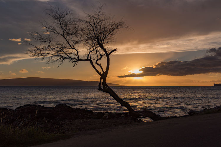 Hawaii Beach Beauty In Nature Cloud - Sky Horizon Over Water Nature No People Outdoors Scenics Sea Silhouette Sky Sunset Tranquil Scene Tranquility Tree Water Maui