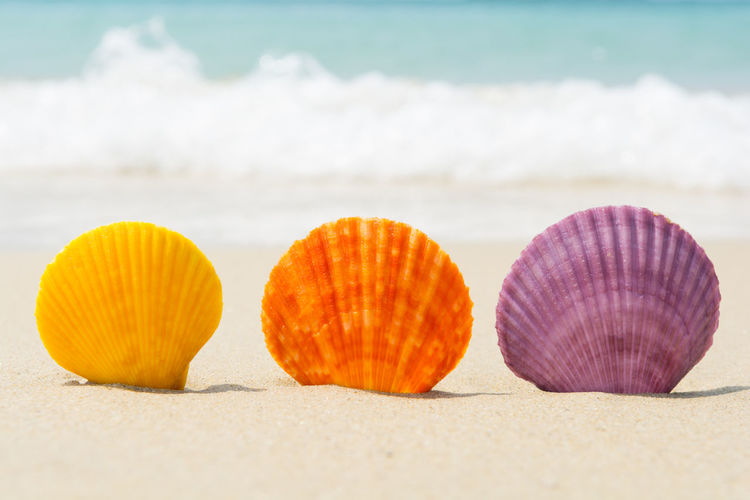 Sea shells in natural vibrant colors on the beach Exotic Freshness In A Row Natural Summertime Sunny Travel Vacations Wave Beach Beauty In Nature Nature Ocean Sand Scallop Sea Seashell Seaside Shell Spa Summer Tropical Turquoise Variation Vibrant