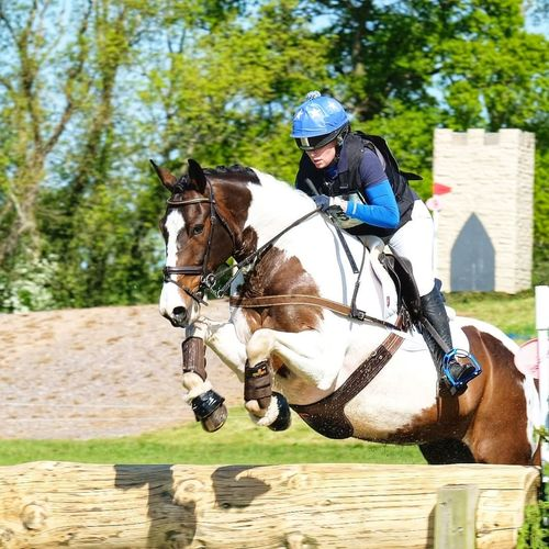 British Eventing, Millfielf School Glastonbury Horse Tree Sports Race Competition Full Length Sport Headwear Adventure Competitive Sport Sports Helmet Rural Scene Bridle Saddle Horseback Riding Stable Working Animal Horse