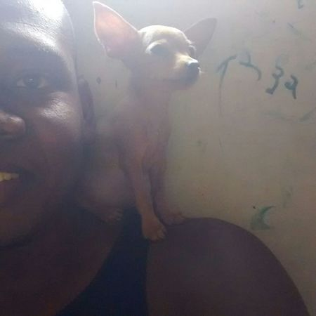 Mouse? Littledog Pets Dog Dimalima Salvador Santa Monica