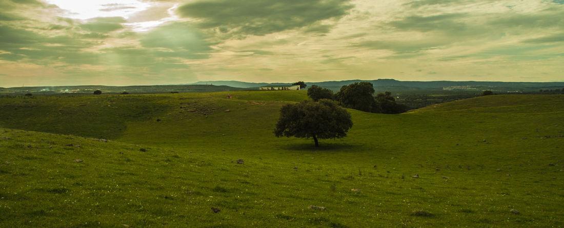 Dehesa Cañada Incosa. Al fondo Sierra Morena. BAños d e la Encina Andalucía Nature Dehesa Jaen Province Linares Sierramorena TrashumanciaJaén