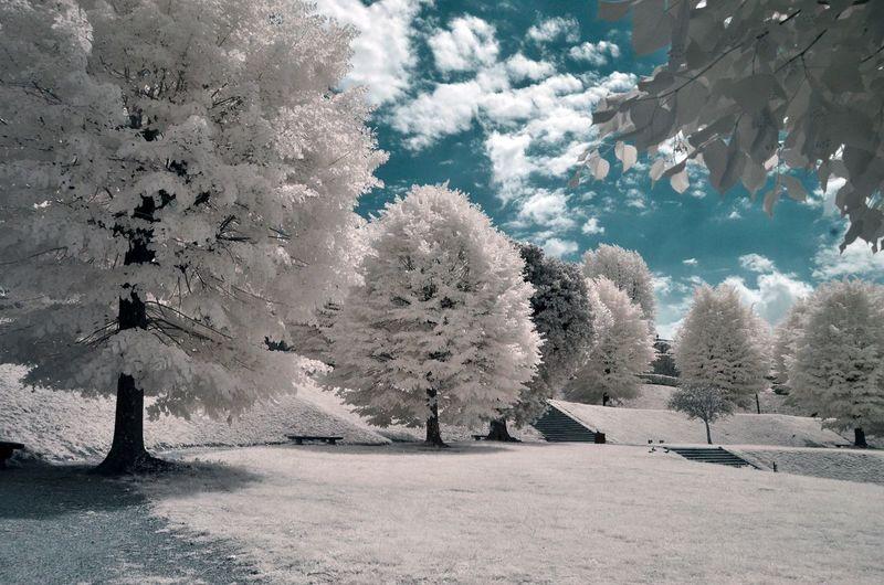 Tree Plant Snow